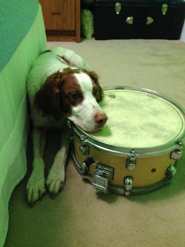 "Keeping the rhythm on snare it's Barkin' ""Beats"" Murphy!"